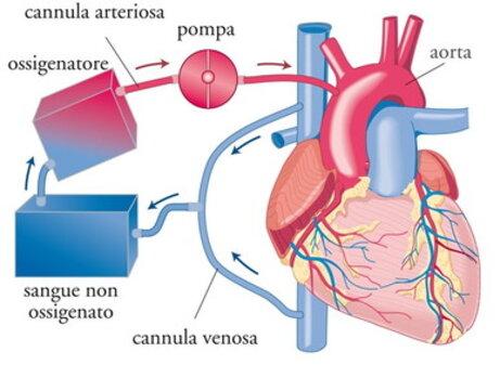 Funzione del cuore e circolazione extracorporea
